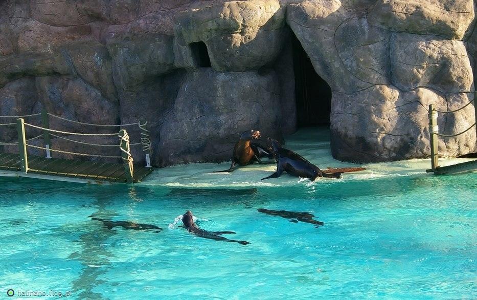 Znalezione obrazy dla zapytania zoo opole