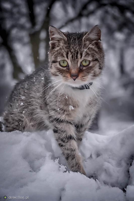 pierwsza zima Ferdka