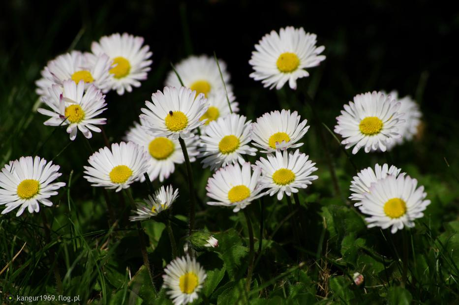 ...na przywitanie po dłuższej nieobecności...ku słońcu...( rok 2013.05.03 )