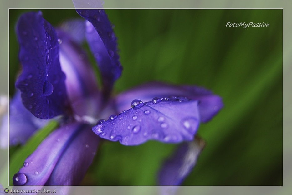 The Rain II
