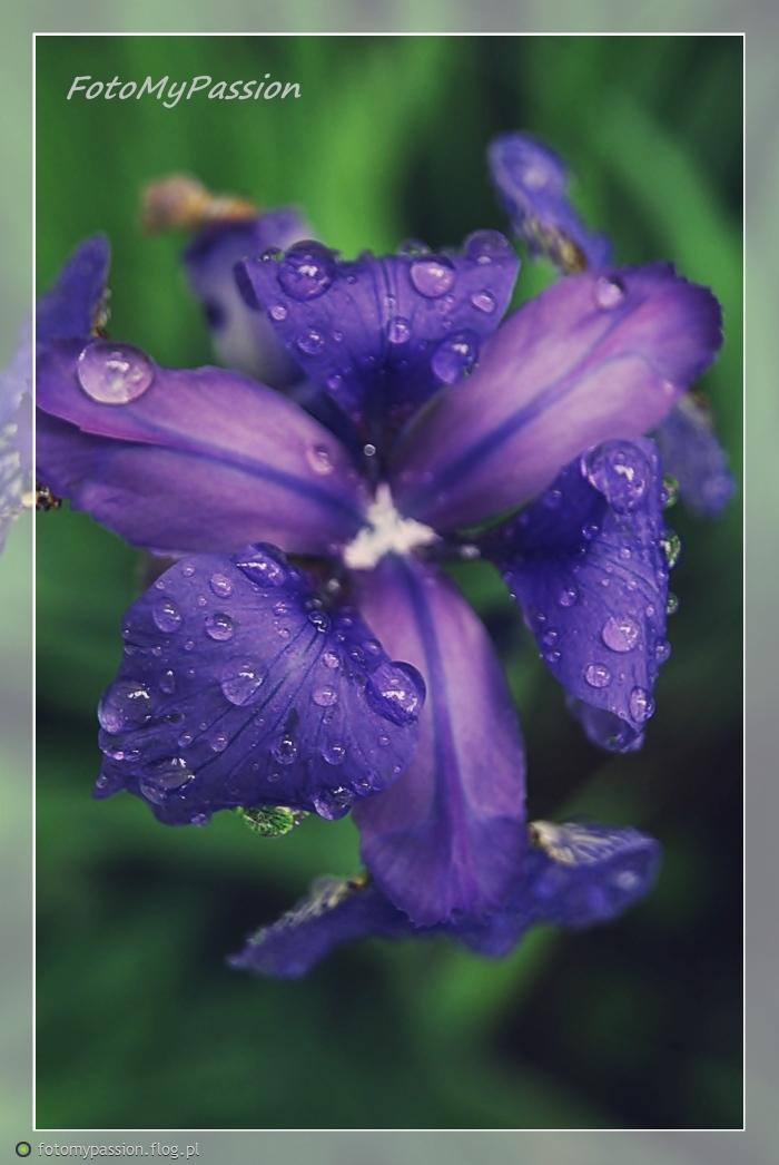 The Rain V