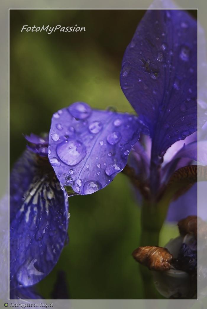 The Rain VI