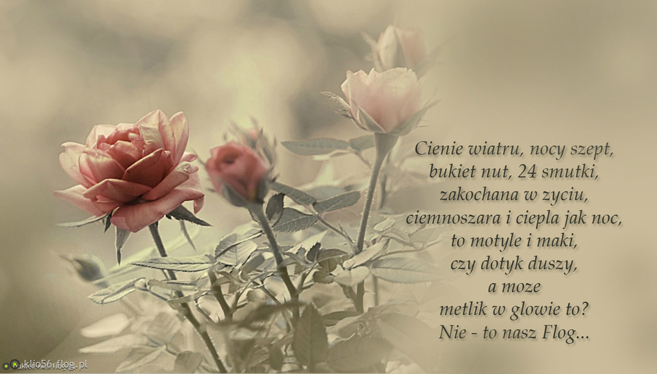 W Podzięce Za Róże Wierszyk żarcik O Flogu Zdjęcie