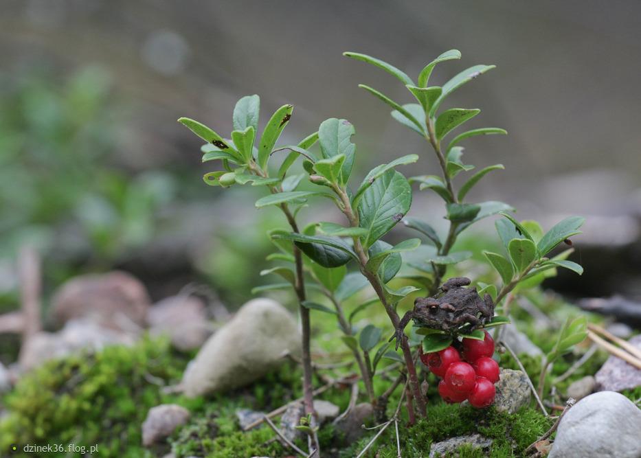 Leśne sytuacje ... Teraz ja daję Tobie sekundę z życia lasu ... pozdrawiam :)
