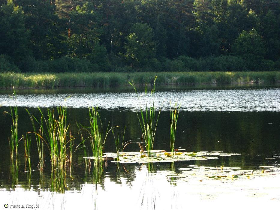 """Jezioro """"Czyste """"raz jeszcze..."""