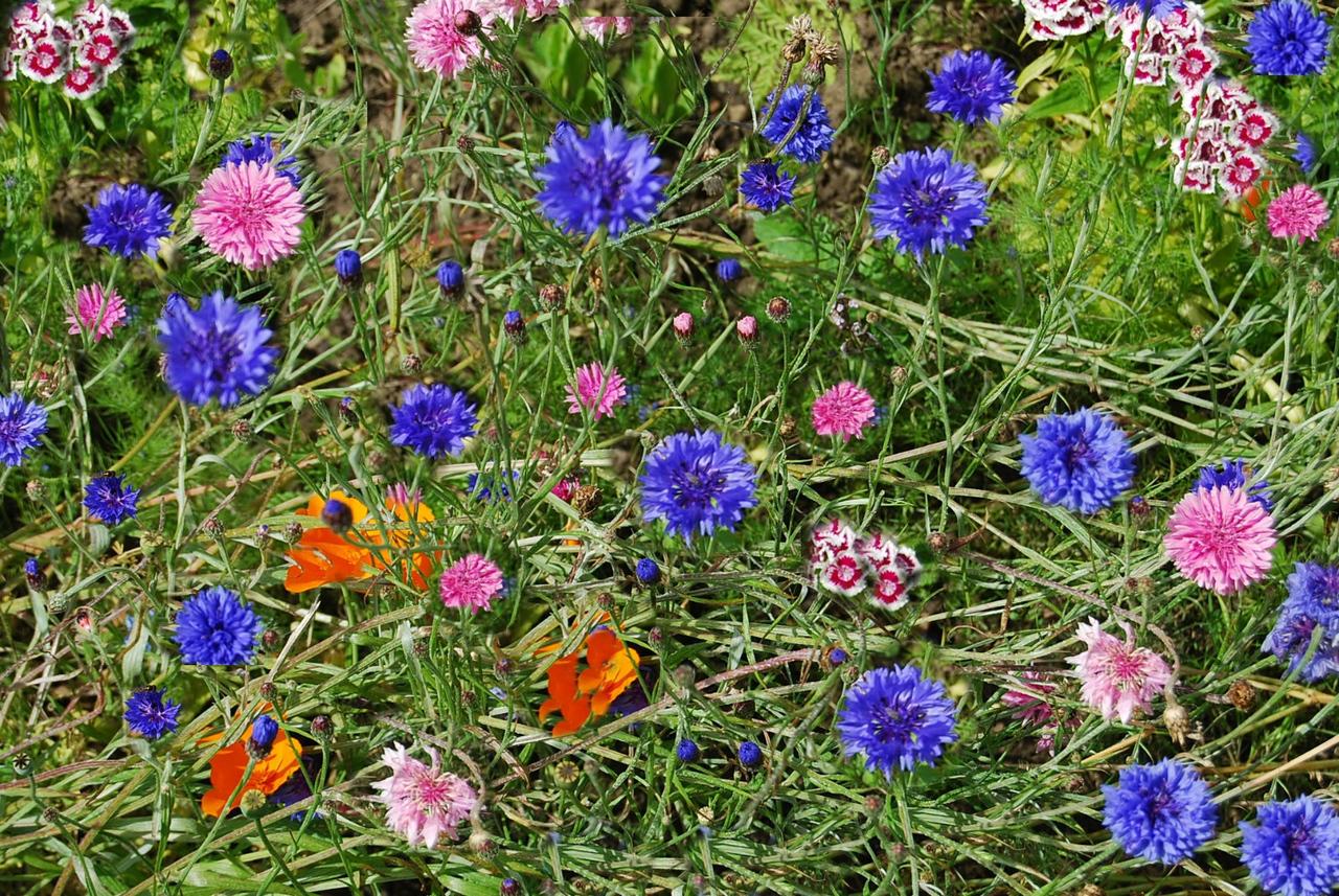 kwiaty kwiatki kwiatuszki fotoblog
