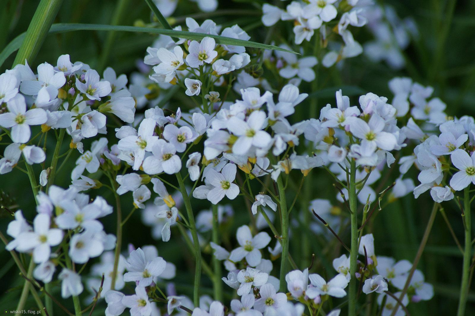 Kwiaty Lakowe Zdjecie Fotoblog Wisko15 Flog Pl