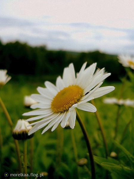 http://s8.flog.pl/media/foto_middle/8841701_zakochala-sie-w-odbiciu-wlasnych-uczuc-na-jej-nadgarstkach.jpg