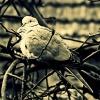 :: Little bird...