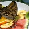 wszyscy uwielbiają owoce.