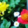 Czerwony kwiat :: Czerwony kwiat