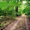Leśna droga :: W sam raz na niedzielę.