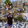 Zalatana :: Gołębie... powszechnie ni<br />elubiane ptaki, czasem po<br />trafią być fantastyczne :<br />)