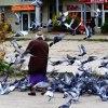 Zalatana #2 ::  Gołębie... powszechnie n<br />ielubiane ptaki, czasem p<br />otrafią być fantastyczne <br />:) Drugie podejście