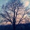 The same tree... :: chce mi się spać nie chce<br /> mi się kłaść   antynomie