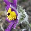 Trochę wiosny dla Ciebie <br />Aniu:-)) :: Miłego oraz pogodnego pop<br />ołudnia dla miłych gości