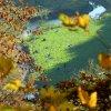 Ojców. W dolinie Prądnika<br /> piękną jesienią.