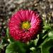 Różowy kwiatek :: Różowy kwiatek