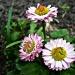 Trzy piękne kwiaty :: Trzy piękne kwiaty