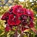 Czerwony kwiatek :: Czerwony kwiatek