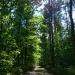 dzisiejszy wypad do lasu...spacerek