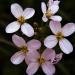 Gdy masz wrażliwą duszę nawet polny kwiat zafascynuje cię swym pięknem w skromności...:)