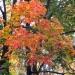 Jesienny kolorów miszmasz ...Dzień dobry ..Pogodnego Piątkowego dnia ..Pozdrawiam ..:)
